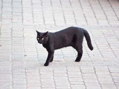 chat en ville