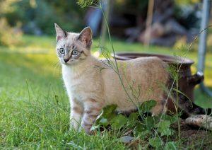 Vermifuger son chat - pourquoi, quand, comment