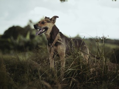 proteger mon chien a la campagne