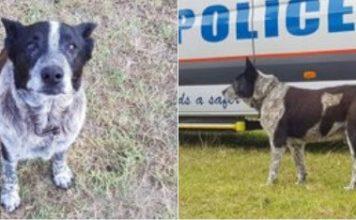 une filette de 3 ans sauvé par un chien
