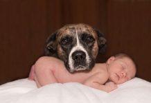 chiens et bébés, les dangers, les conseils...