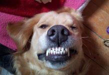 mon chien souris